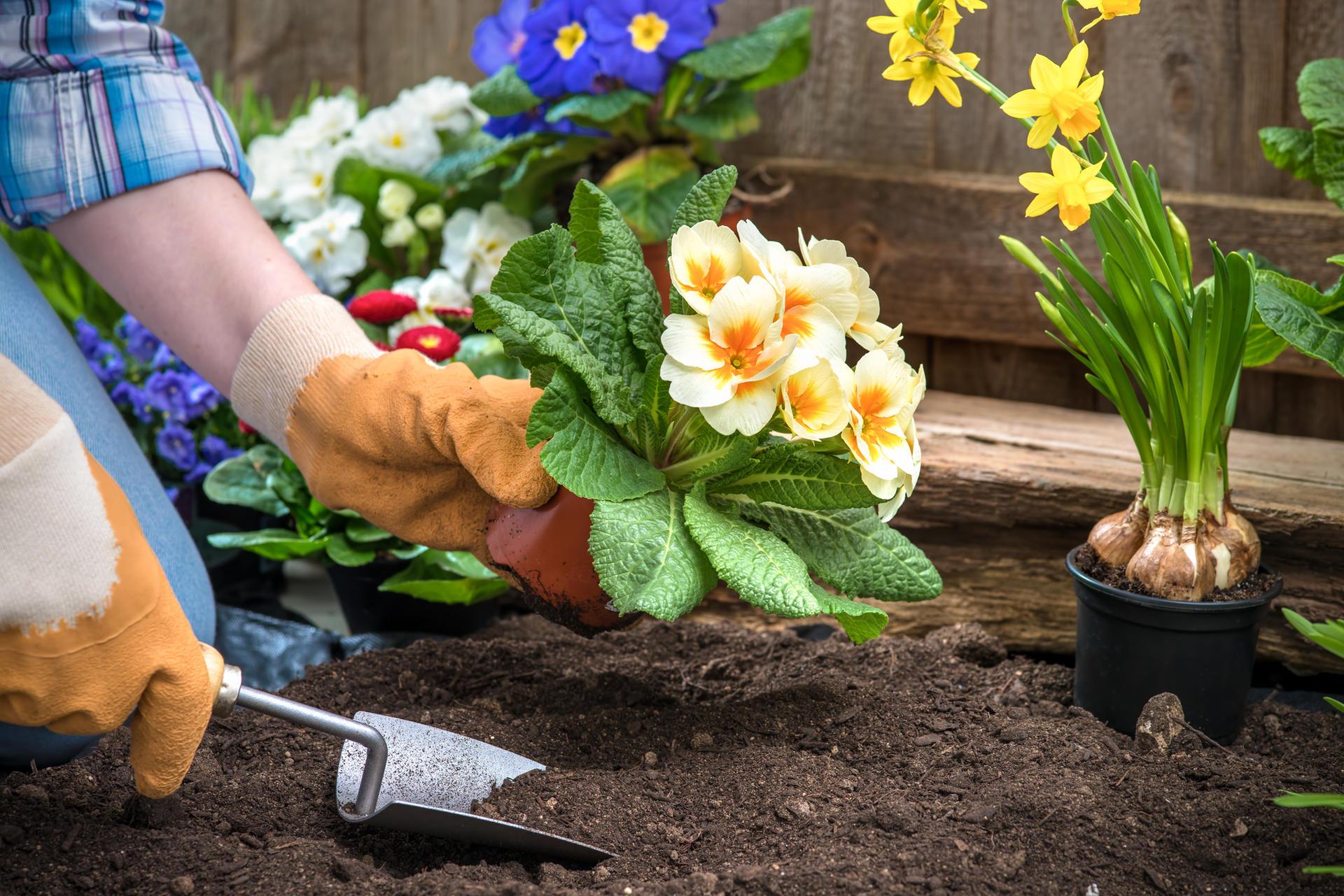 Выращивание цветов и декоративных кустарников